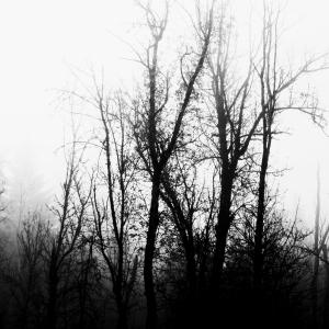 Misty Dead Trees